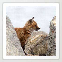 Watercolor Fox, Red Fox 41, Union Reservoir, Boulder Art Print