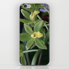 Green orchid iPhone Skin