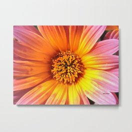 A March 1st Colorburst Metal Print
