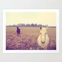 horses Art Prints featuring Horses by Rebecca Mcmillan
