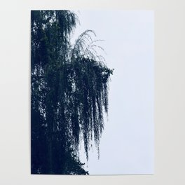 Weeping Tree Poster