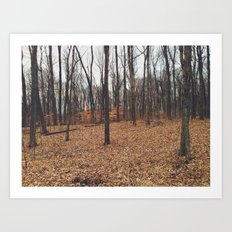 Indiana Forest Art Print