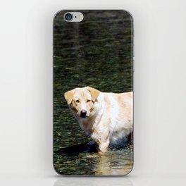 Mongolian Dog iPhone Skin