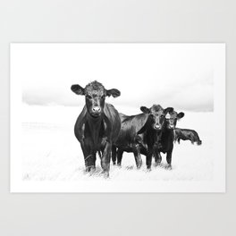 Cattle Country Photograph Art Print