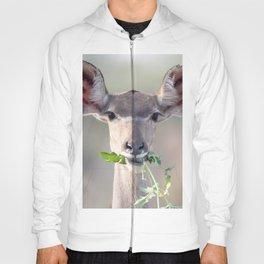 Kudu portrait Hoody