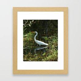 White Egret Framed Art Print