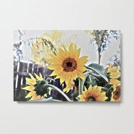 Sunflower Blooms Metal Print