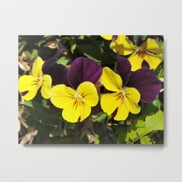 The Pansies at the Corner Metal Print