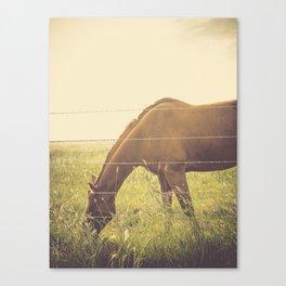 Texas Horse Grazing Canvas Print