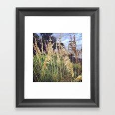 Beach Wheat Framed Art Print