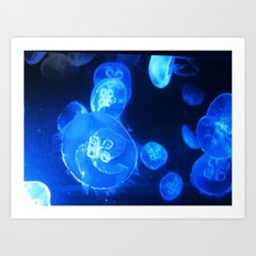 Jelly Fishes Art Print