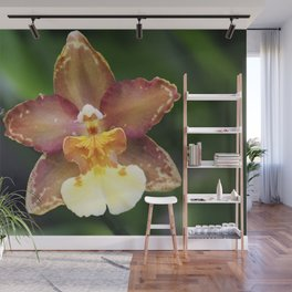 Longwood Gardens Orchid Extravaganza 73 Wall Mural