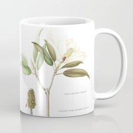 """Flowering """"Little Gem"""" Magnolia Tree Coffee Mug"""