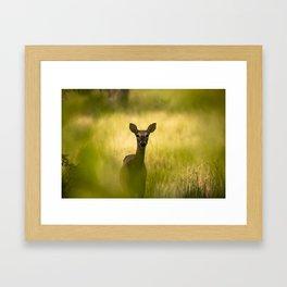 Doe Eyes - Watchful Young Deer Through Tree Leaves in Wyoming Framed Art Print