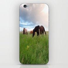 horses iPhone & iPod Skin
