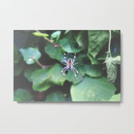 Garden Spider - Nature Photography Metal Print