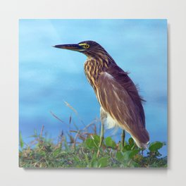 Pond Heron on Grass Varkala Metal Print
