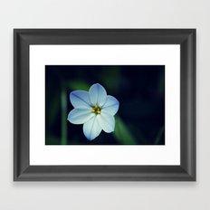Spring Flower 05 Framed Art Print