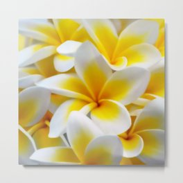Frangipani halo of flowers Metal Print