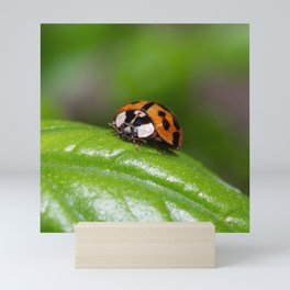 Small red ladybird resting on a green basil leaf Mini Art Print