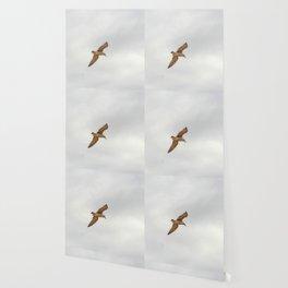 Seagull bird flying Wallpaper