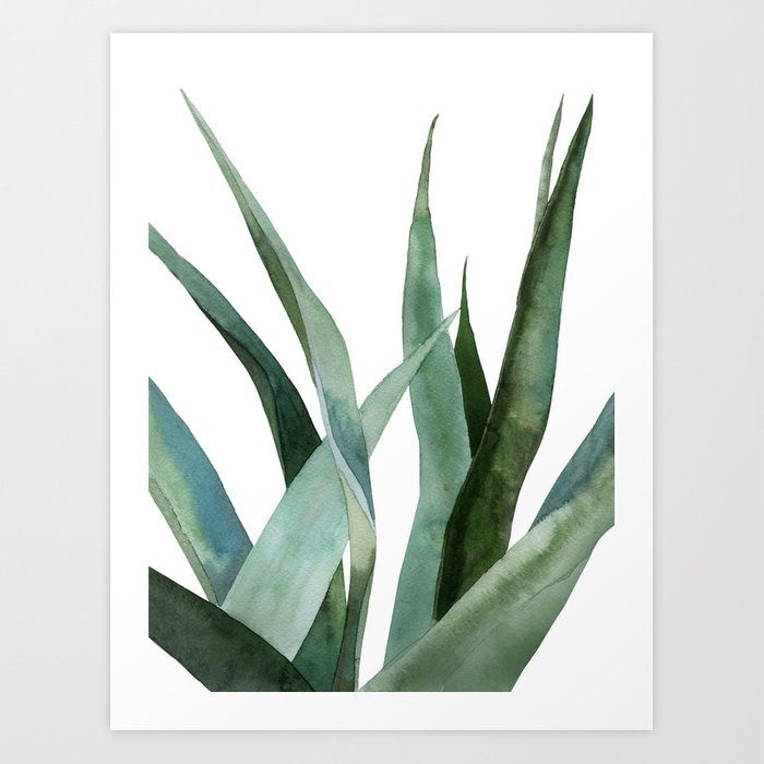 Discover the motif AGAVE PLANTS by Art by ASolo as a print at TOPPOSTER