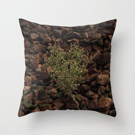 Green plant on the gray stones, grow on the stones Throw Pillow