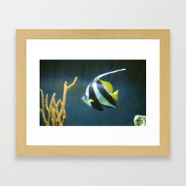 Banner  Fish Framed Art Print