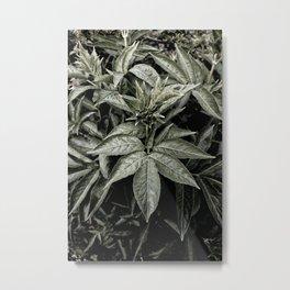 Envious Green. Metal Print