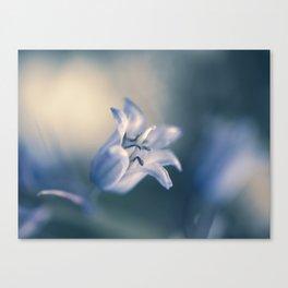 Jacinthe des bois Canvas Print