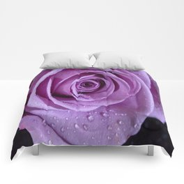 Purple Rose-3 Comforters