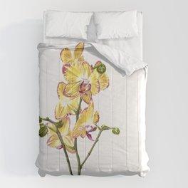 Yellow Phalaenopsis Orchid Traditional Artwork Comforters