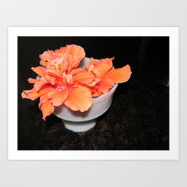 Flower: Hibiscus Art Print