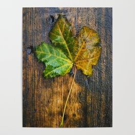 The autumn leaf Poster