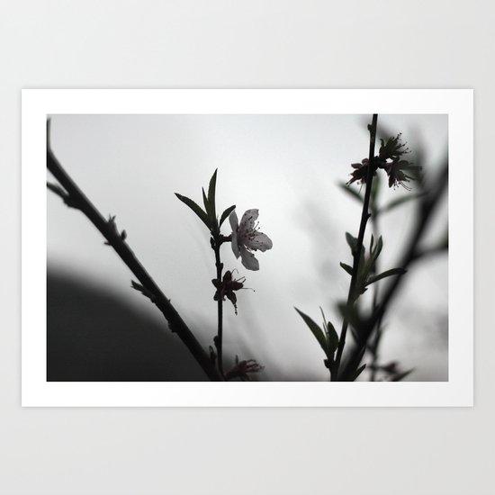 Blossom II Art Print