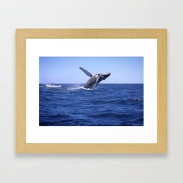 Breaching Humpback Whale Framed Art Print
