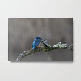 Kingfisher on a Branch Metal Print