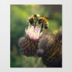 BABY BEE Canvas Print