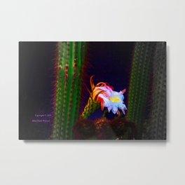 """""""Cactus Flower At Sunset #105"""" Photograph Metal Print"""