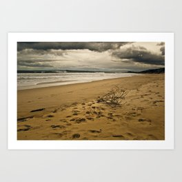Washed up on Shore Art Print