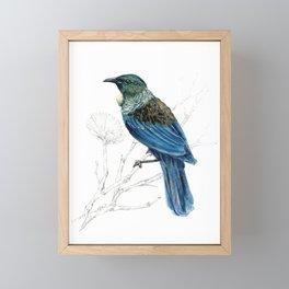 Tui, New Zealand native bird Framed Mini Art Print