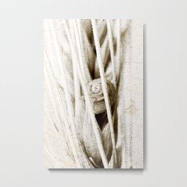 The snail in grain Metal Print