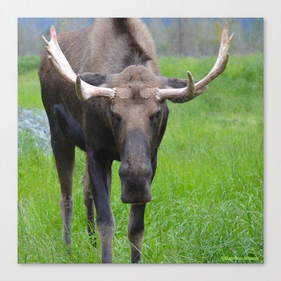 Bullwinkle Bull Canvas Print