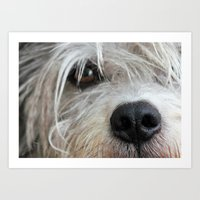 The puppy is watching Art Print