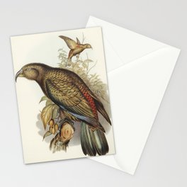 Kea Parrot (Nestor notabilis) illustrated by Elizabeth Gould (1804–1841) for John Gould's (1804-1881 Stationery Cards