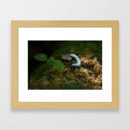Woodland Wanderer Framed Art Print