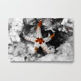 Laid-back starfish Metal Print