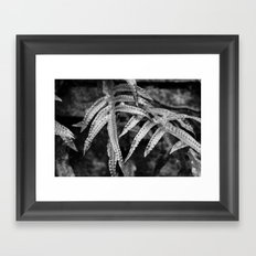 Silvery Foliage Framed Art Print