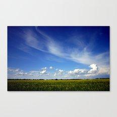 Sun Flower Fields Canvas Print