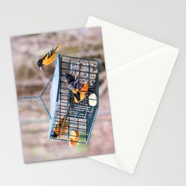 Triple Play: Three Orioles on Suet Feeder Stationery Cards